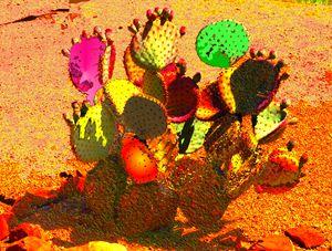 Cactus Gone Wild