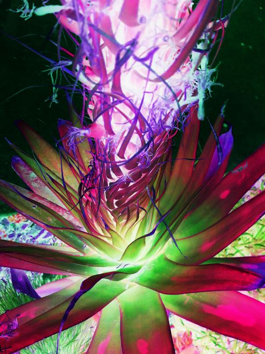 Exploding Beauty - Ron Irwin