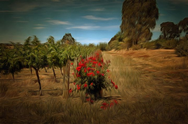 Barossa Vines - Alan Carson
