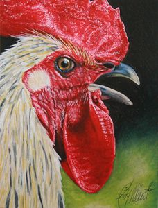 Rooster Portrait #1