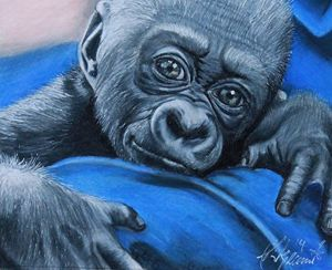 Gorilla Infant Portrait