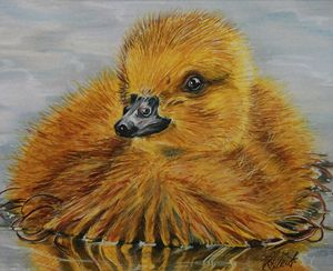 Duckling Afloat