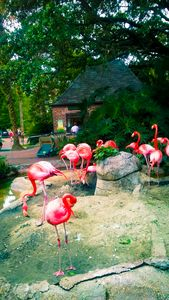 Flamingos In the New Orleans Zoo