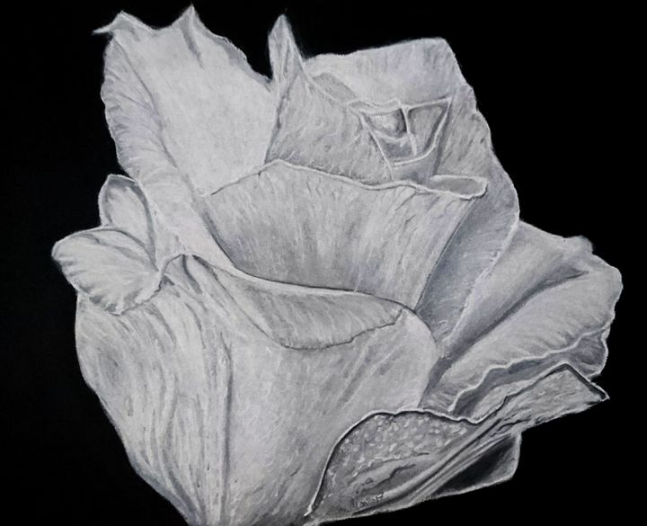 white rose - The Chameleon
