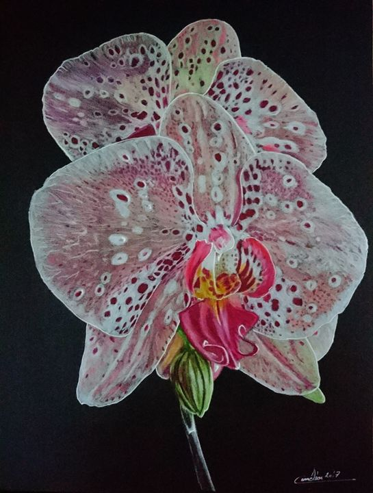 orchids - The Chameleon
