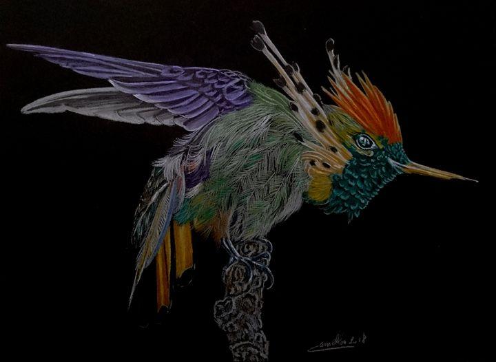 hummingbird - The Chameleon