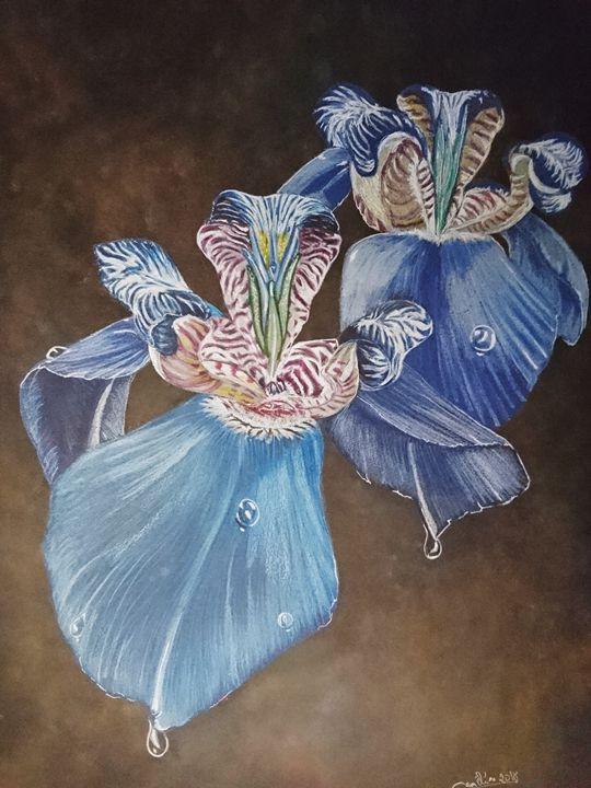 blue orchids - The Chameleon