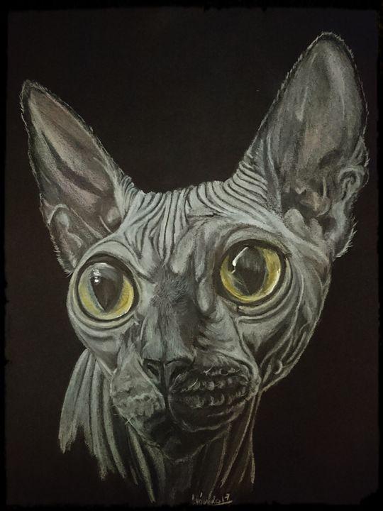 princess mystic cat - The Chameleon