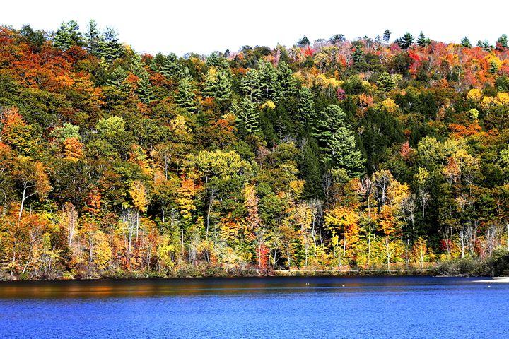 Fall Foliage - Michael Henry