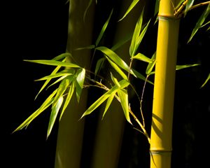 Bamboo Magic - helen geld
