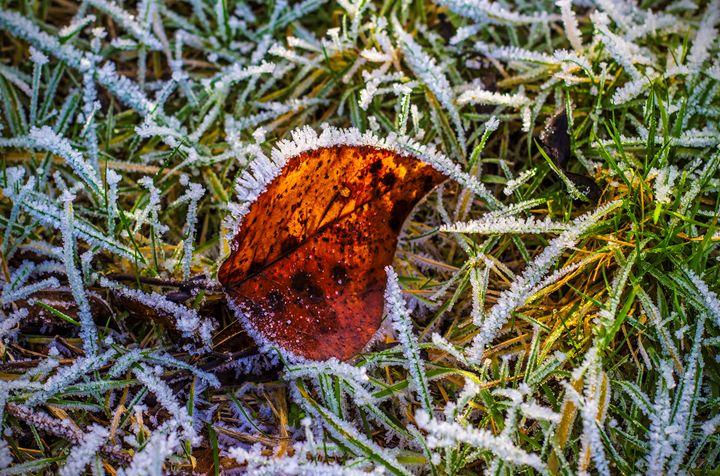 Frosty Leaf - helen geld