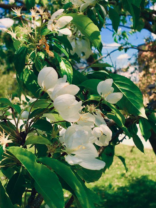 Dramatic Warm White Flower - AJ