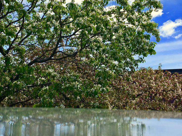 Tree's Reflection - AJ