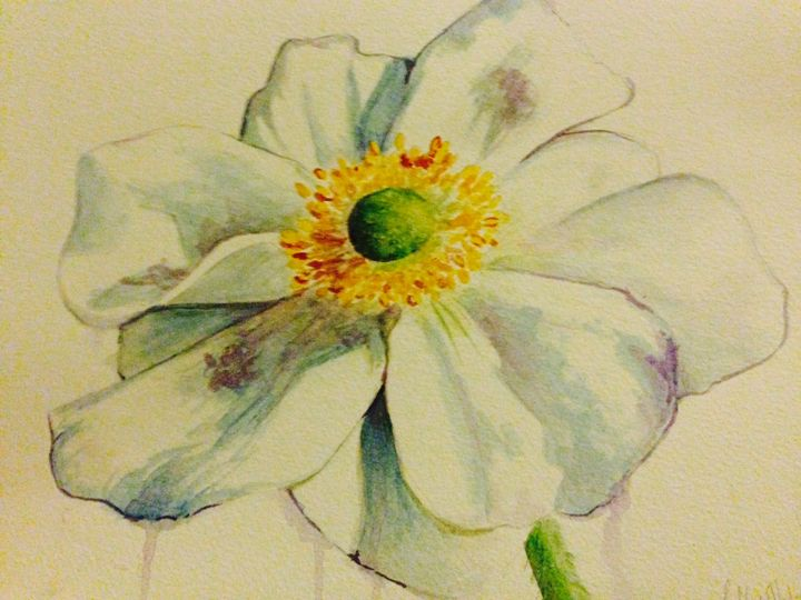 Japanese Windflower - Sophie's sketches