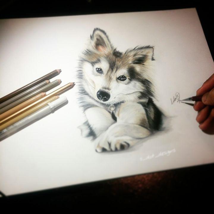 Alaskan Klee Kai (Colored Pencil) - S Dot Designs
