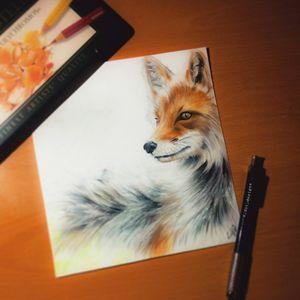 Red Fox (Original)