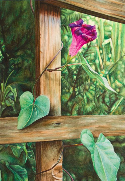 Vine Climb - Kayla Coates