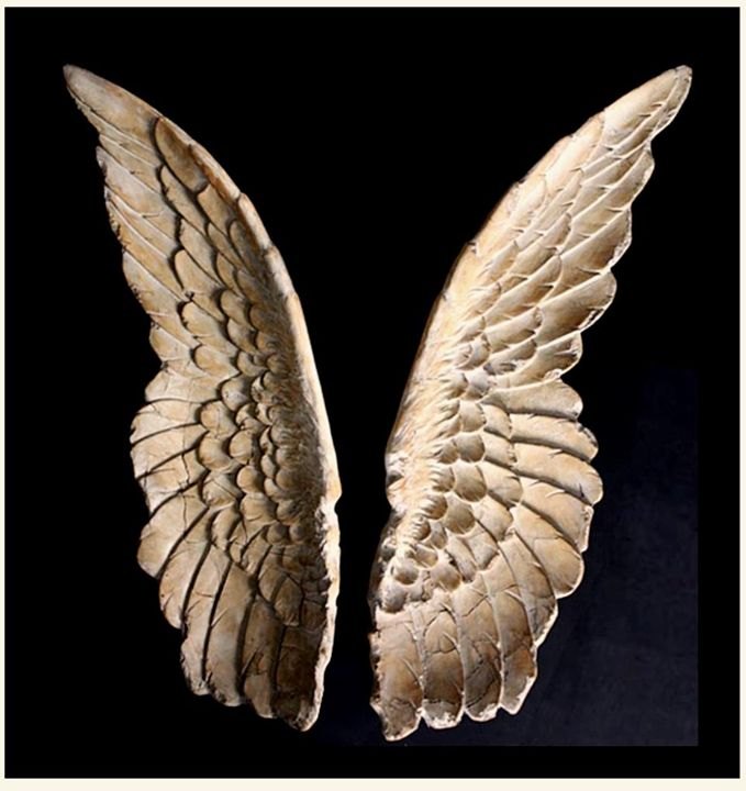 Angel Wings Wall Sculpture Chic Art And Accents