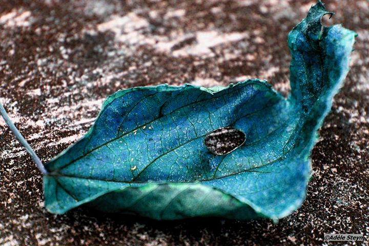 Blue Autumn - Adèle's Photo Art