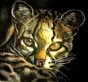 contact | margay