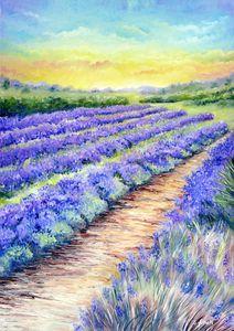 'Lavender Fields of Kent'