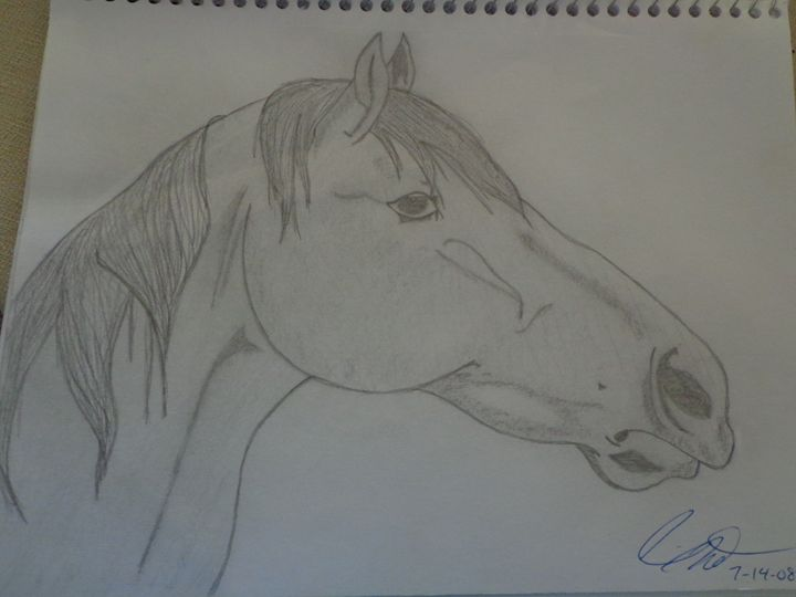 Horse Head - Paintings