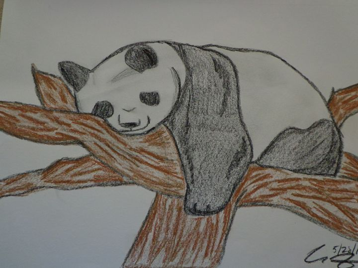 Sleeping Panda - Paintings
