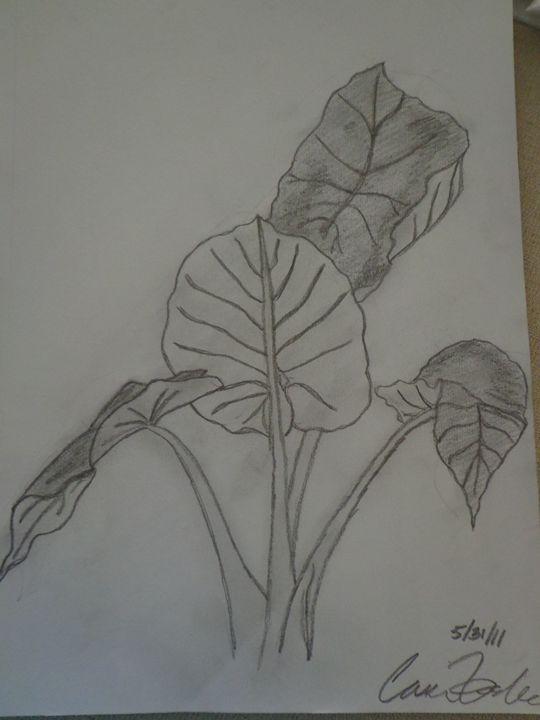 Elephant Ear Plant - Paintings