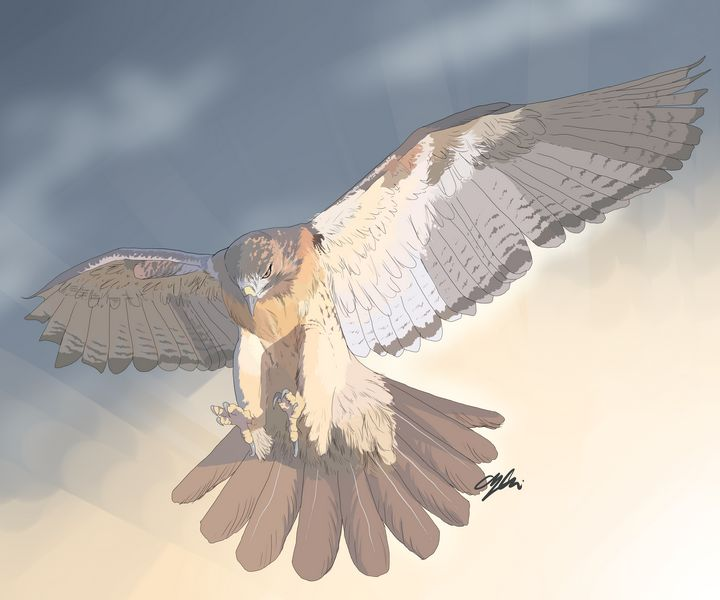 Red Tail - 1XWarrior