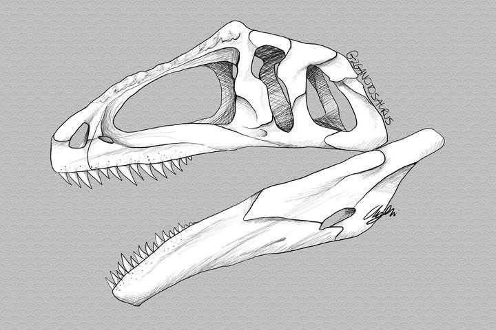 Giganotosaurus Skull - 1XWarrior