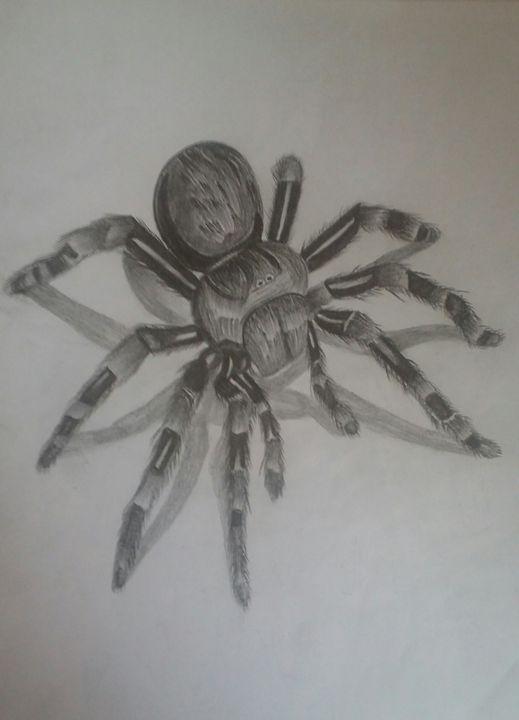 Spider 3d pencil drawing - Theju Arts