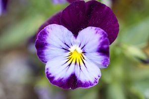 Purple In Macro - Michael's Seeking Light Photography