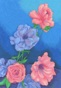English Rose Blossoms