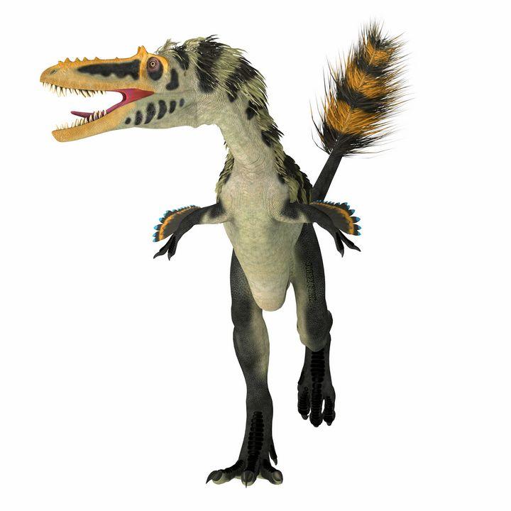 Alioramus altai Dinosaur Front - Corey Ford Gallery LLC