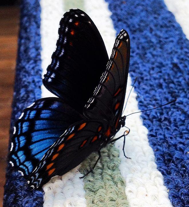Butterfly on a Rug - SLPeders