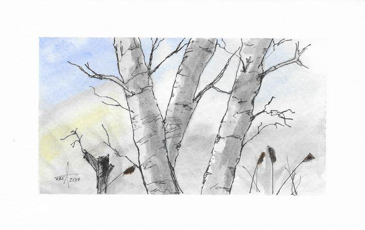 Winter Birch Trees - Adam Spiker