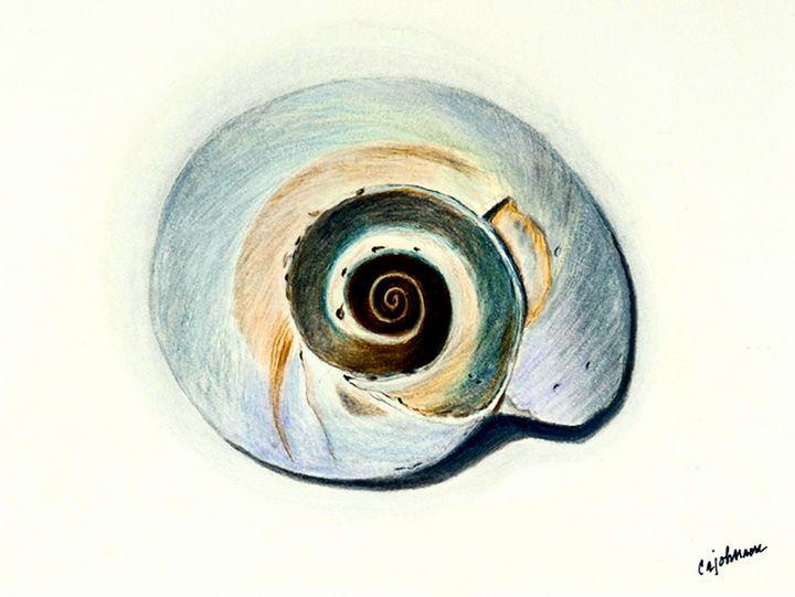 Nautilus Shell - Carol Ann Johnson