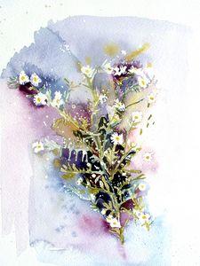 Daisy Weed or Fleabane