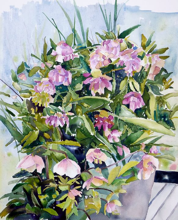 Hellebores - US Country Wildflowers, Art by Roxanne Shields