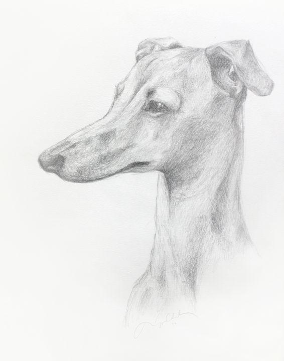 Italian Greyhound Profile - Morgyn Church