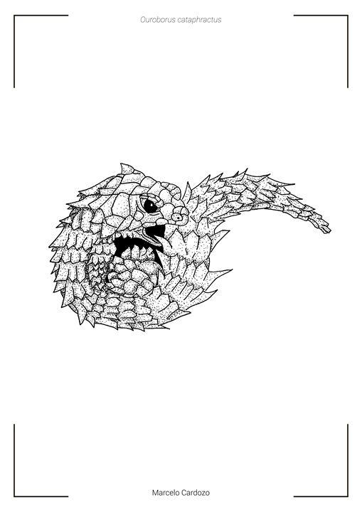 Ouroborus cataphractus - Marcelo Cardozo