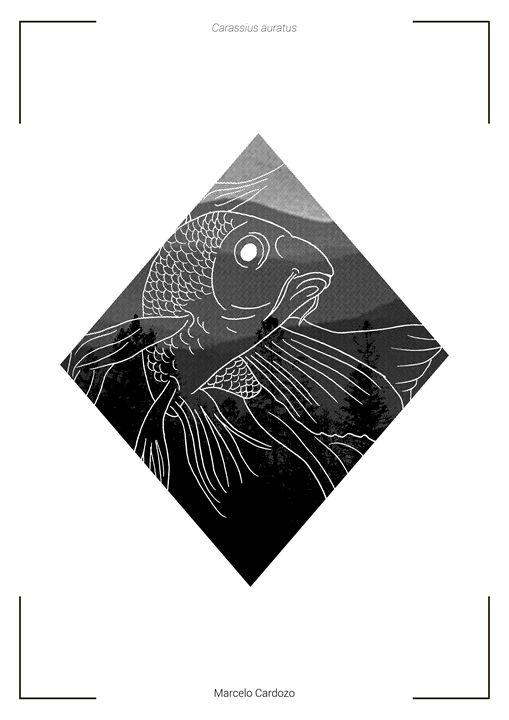 Carassius auratus - Marcelo Cardozo