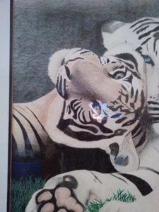 Tigers - David m Gooding