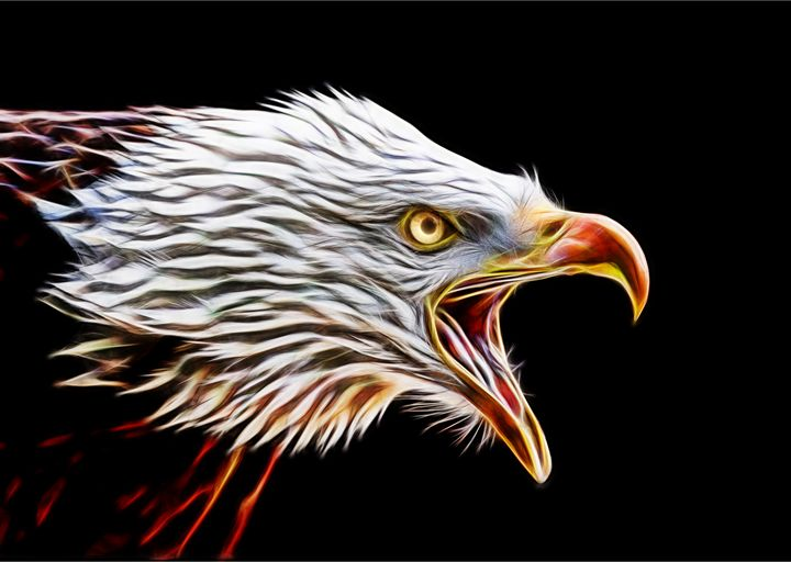 bald eagle - bobarooo