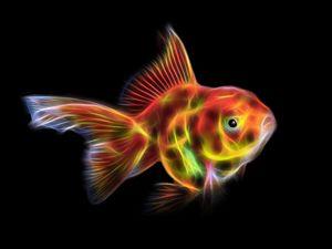 Glowing goldfish