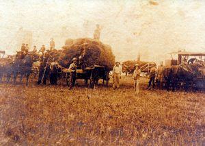 Threshing Crew with Wagons of Straw