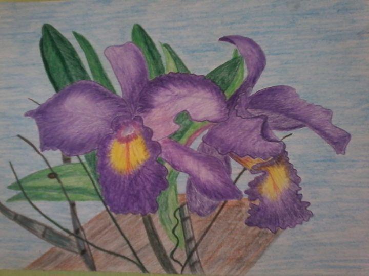 Orchid - angel potlot