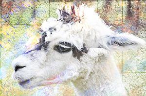 Alpaca - Elaine Berger