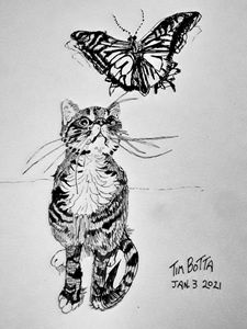 Bailey and the Butterfly
