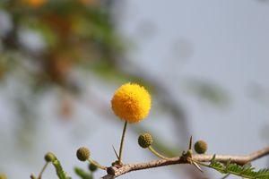 The yellow bulb!!